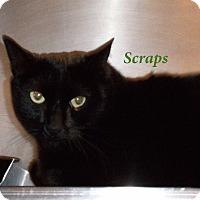 Adopt A Pet :: Scraps - El Cajon, CA