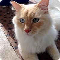 Adopt A Pet :: Tweeter (IL) - Orlando, FL