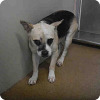 Adopt A Pet :: *ASH - Orlando, FL