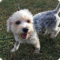 Adopt A Pet :: GABE - Phoenix, AZ