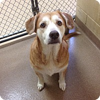 Adopt A Pet :: 1-3 - Triadelphia, WV