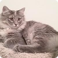 Adopt A Pet :: Pixie - Cedar Springs, MI