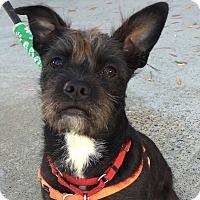 Adopt A Pet :: Nancy - CUMMING, GA