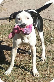 Cattle Dog/Pointer Mix Dog for adoption in Snow Hill, North Carolina - Sadie-NEW LEASH ON LIFE