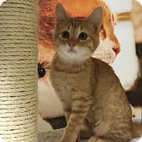 Adopt A Pet :: Tinkerbell - ROSENBERG, TX