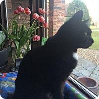 Adopt A Pet :: Joy - Chaska, MN
