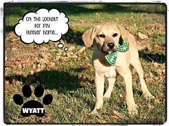 Labrador Retriever/Hound (Unknown Type) Mix Puppy for adoption in Marion, Kentucky - Wyatt