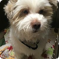 Adopt A Pet :: Snoopy - Oak Ridge, NJ