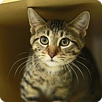 Adopt A Pet :: Dino - Kettering, OH