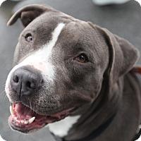 Adopt A Pet :: Luna - San Francisco, CA