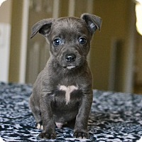 Adopt A Pet :: Gannett - Staunton, VA