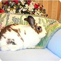 Adopt A Pet :: Norris - Newport, DE