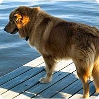 Adopt A Pet :: BAER - Jacksonville, FL