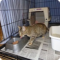 Adopt A Pet :: Lovey - Wakinsville, GA