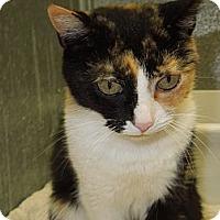 Adopt A Pet :: Sweetie - Medina, OH