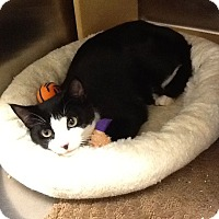 Adopt A Pet :: Piper - Colmar, PA