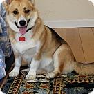 Adopt A Pet :: Sunny Rose