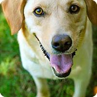 Adopt A Pet :: Piper - Hamburg, PA