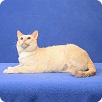 Adopt A Pet :: Yancey - Cary, NC
