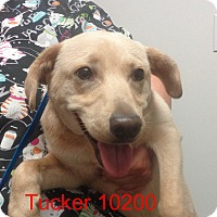 Adopt A Pet :: Tucker - baltimore, MD