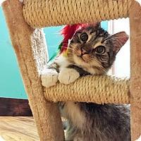 Adopt A Pet :: Daisy - Oakland, CA