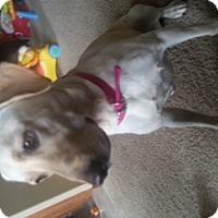 Adopt A Pet :: Gemma - Lewisville, IN