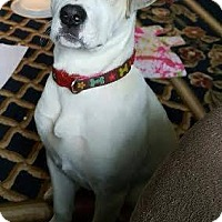 Adopt A Pet :: Maggie puppy - Brooklyn Center, MN