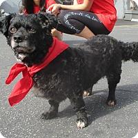 Adopt A Pet :: GRETA - Los Angeles, CA