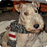 Adopt A Pet :: SPORT - Dumont, IA