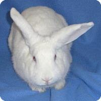 Adopt A Pet :: Lila - Woburn, MA
