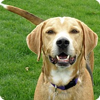 Adopt A Pet :: Lance-ADOPTED! - Garfield Heights, OH
