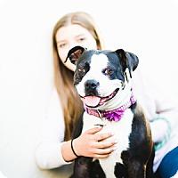 Adopt A Pet :: Fiona - Claremont - Chino Hills, CA