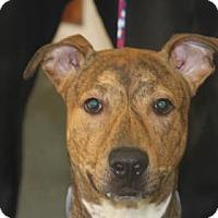 Adopt A Pet :: Cam - Greensboro, NC