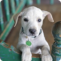 Adopt A Pet :: Winona - San Antonio, TX