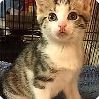 Adopt A Pet :: Alexandria - Forest Hills, NY
