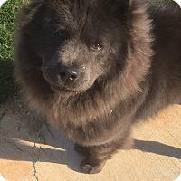 Adopt A Pet :: Lolo - Tucker, GA