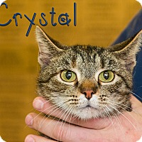 Adopt A Pet :: Crystal - Somerset, PA