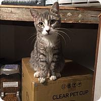 Adopt A Pet :: Hobie - New  York City, NY