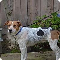 Adopt A Pet :: Misty - Lodi, CA