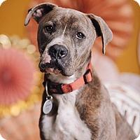Adopt A Pet :: Humphrey - Portland, OR