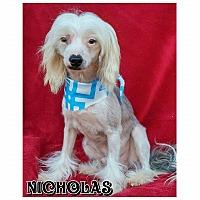 Adopt A Pet :: Nicholas - Charlotte, NC