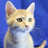 Adopt A Pet :: Quinn - Winston-Salem, NC