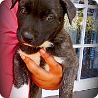 Adopt A Pet :: Jaxxy - Cypress, CA