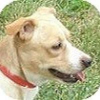 Adopt A Pet :: Louie - Hamilton, ON