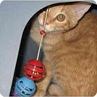 Adopt A Pet :: Valentino - Terre Haute, IN