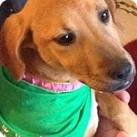 Adopt A Pet :: baby Sadie - Marlton, NJ