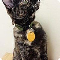 Adopt A Pet :: Olivia - Edmond, OK