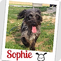 Adopt A Pet :: Sophie - Brazil, IN