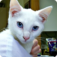 Adopt A Pet :: White Swan - Toledo, OH