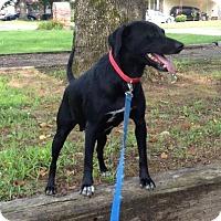 Adopt A Pet :: Sadie - Morrilton, AR